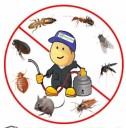 PestVeda - For All Round Pest Control Services